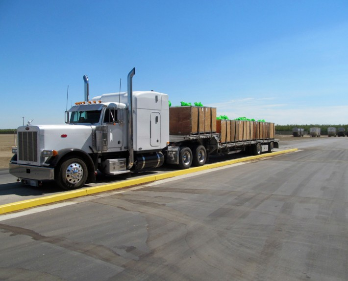 Superior Almond Shipping